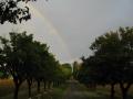 dulcamara-ozzano-bologna-rainbow
