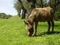 dulcamara-ozzano-cooperativa-bologna-animali-1RAMONA