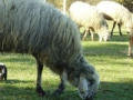 dulcamara-ozzano-cooperativa-bologna-animali-ROSITA