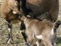 dulcamara-ozzano-cooperativa-bologna-animali-mamma