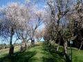dulcamara-ozzano-cooperativa-bologna-spring