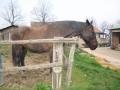 ozzano-bologna-dulcamara-cavallo