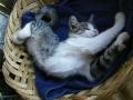 gallery-gatto