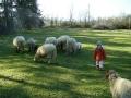 pecore-gallery